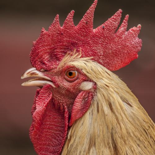 Animal Feed - Bomb Calorimeter Applications